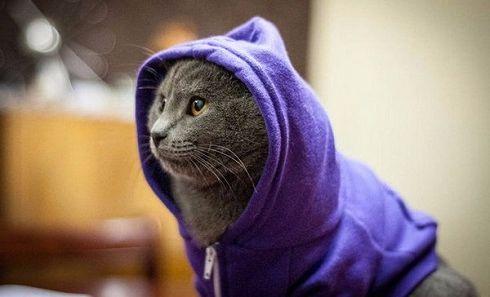 Пошив и продажа одежды для кошек