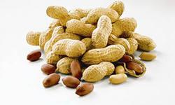 перспективный бизнес - выращивание арахиса