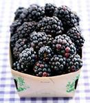 ежевика, вкусная ягода и стабильный доход