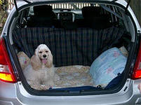 новая идея заработка: такси для животных