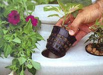 интенсивное выращивание овощей при помощи гидропоники