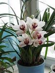 бизнес для женщин – выращивание орхидей