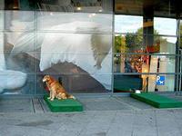платформа-парковка для домашних собак
