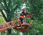 услуги по вырубке деревьев и освобождение земли для посадки новых растений