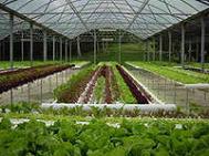 тепличный бизнес, выращиваем овощи круглый год