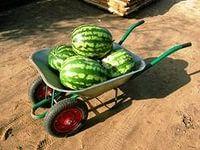 доставка свежих арбузов на дом, как вид сезонного бизнеса