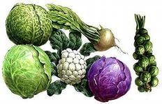 свой бизнес: выращивание и продажа крестоцветных