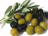 свой бизнес: выращиваем и продаем оливки