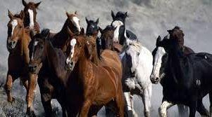 бизнес на разведении и продаже лошадей