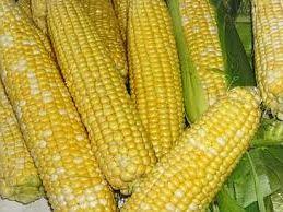 свой бизнес: выращивание и продажа кукурузы