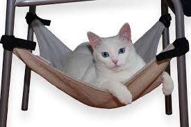 свой бизнес: пошив и продажа гамаков для кошек