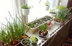 свой бизнес: экологический мини-огород на кухне