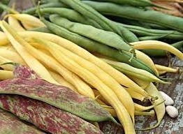 идея заработка на выращивание и продаже фасоли
