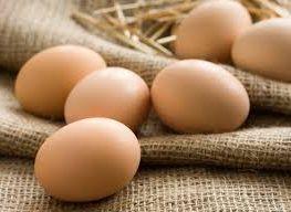 свой бизнес на перепродаже куриных яиц