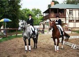 свой бизнес, как открыть конную спортивную школу
