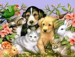 магазин для домашних животных