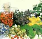 сбор и реализация лекарственных растений