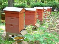 заработок на пчелосемьях. Продажа мёда