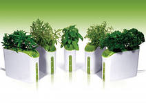 зарабатываем на создание  мини - огородов в офисах, кафе и банках
